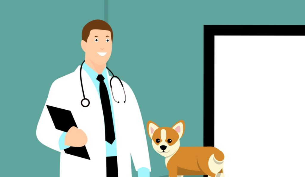 What Is Pet Insurance and What Does It Cover?