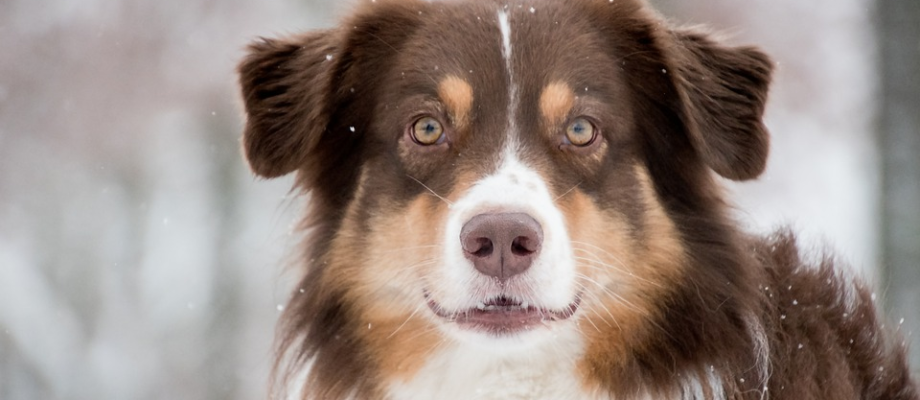 6 Tips to Take Care of Your Pet in Winter