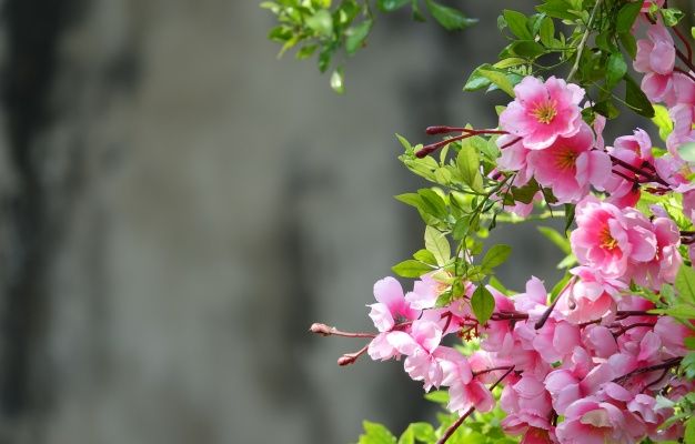 Scented Plants: Fragrant Flowers to Grow in Your Garden